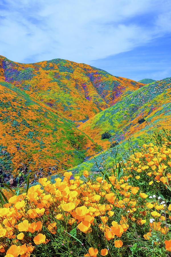 Super Bloom Photograph
