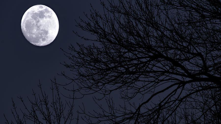 Super Moon by Stephen Riella