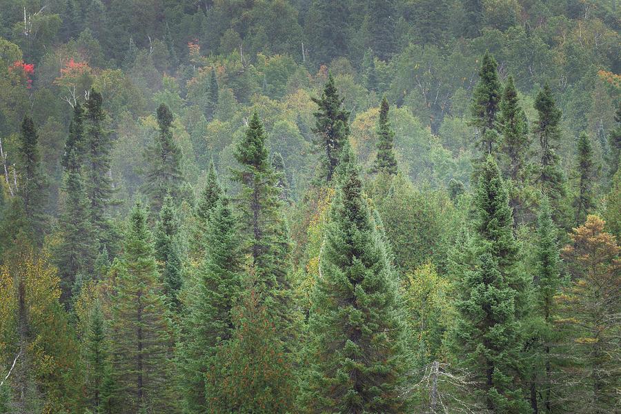 Minnesota Photograph - Superior National Forest I by Alan Majchrowicz