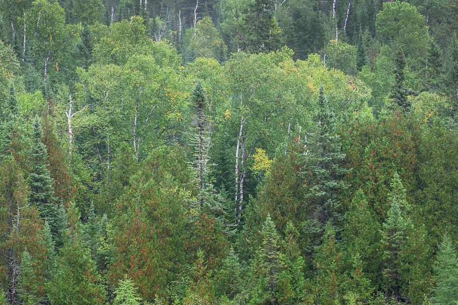 Minnesota Photograph - Superior National Forest IIi by Alan Majchrowicz