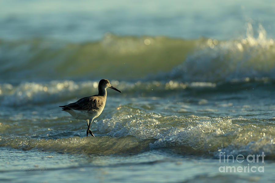 Surf Bird  by Beve Brown-Clark Photography