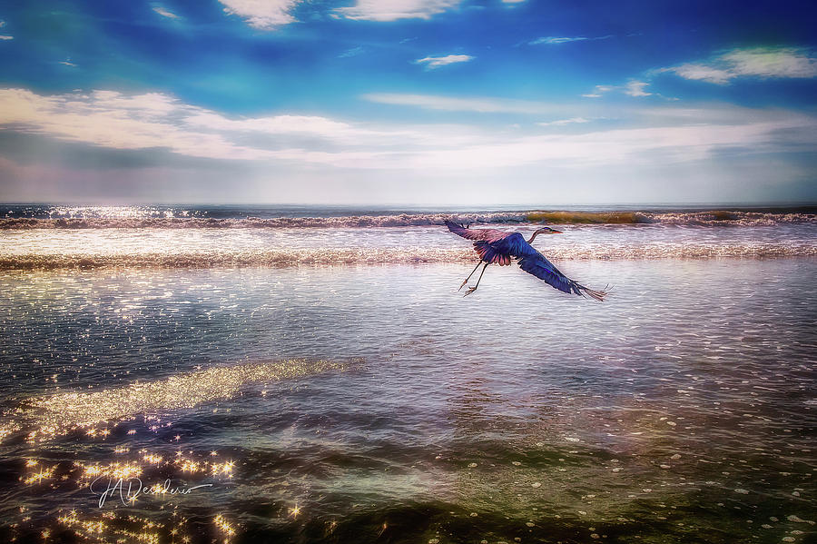 Surf Flight by Joseph Desiderio