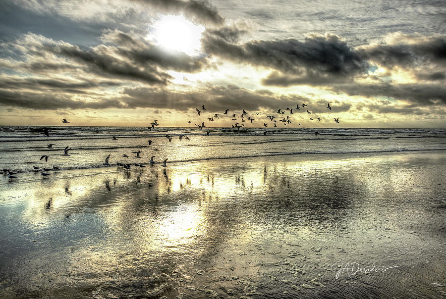 Surf Gulls by Joedes Photography