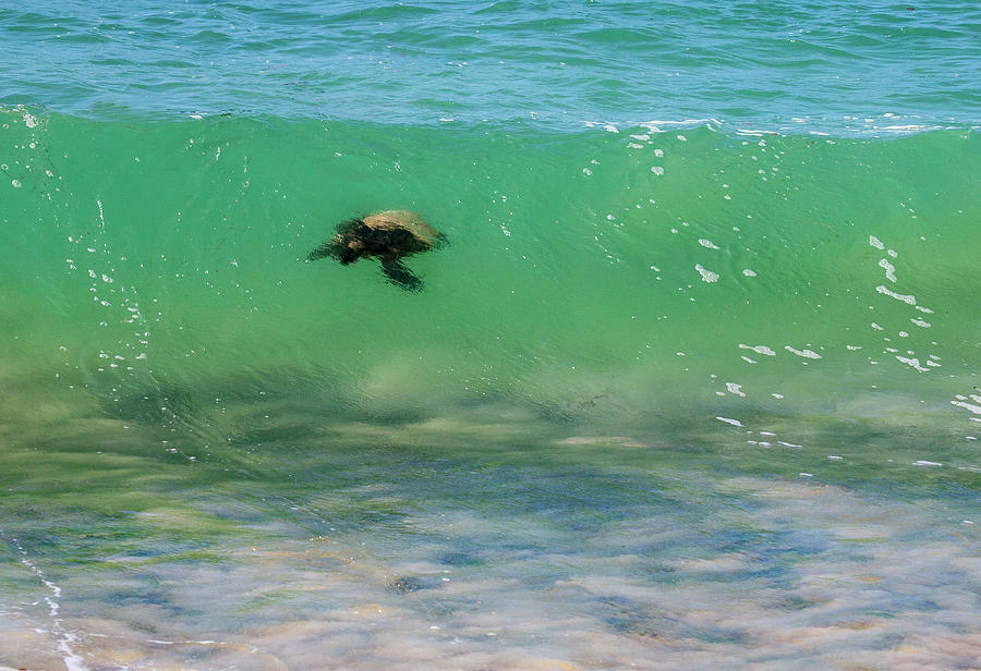 Surfing Turtle by Anthony Jones