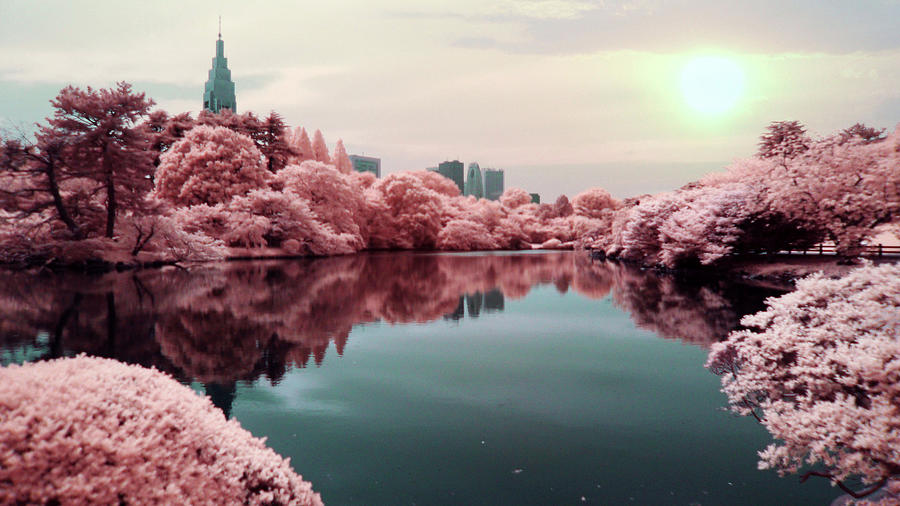 Surreal Lake With Pink Trees By Zachstern Com