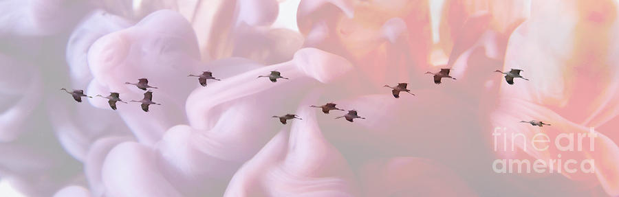 Surreal Sandhills Flying in Formation by Carol Groenen