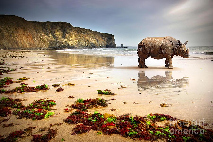 Rhino Photograph - Surreal Scene Of A Big Rhinoceros In An by Carlos Caetano