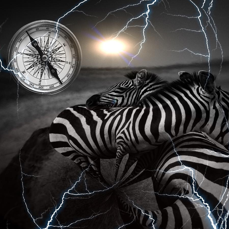 SURREAL ZEBRA by Elie Wolf