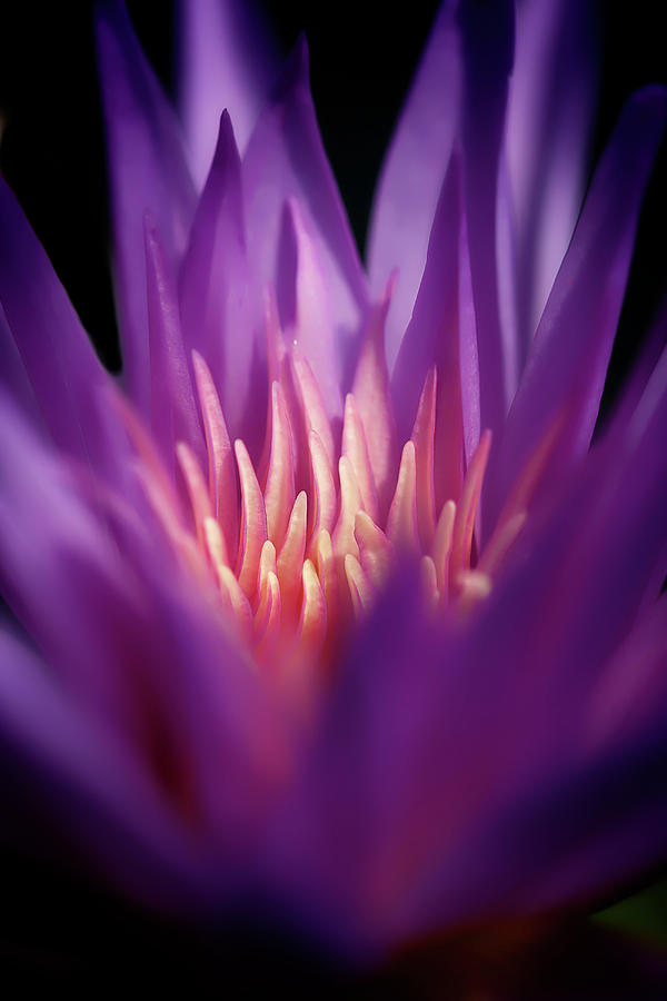 Surrounded By Purple by Wes and Dotty Weber