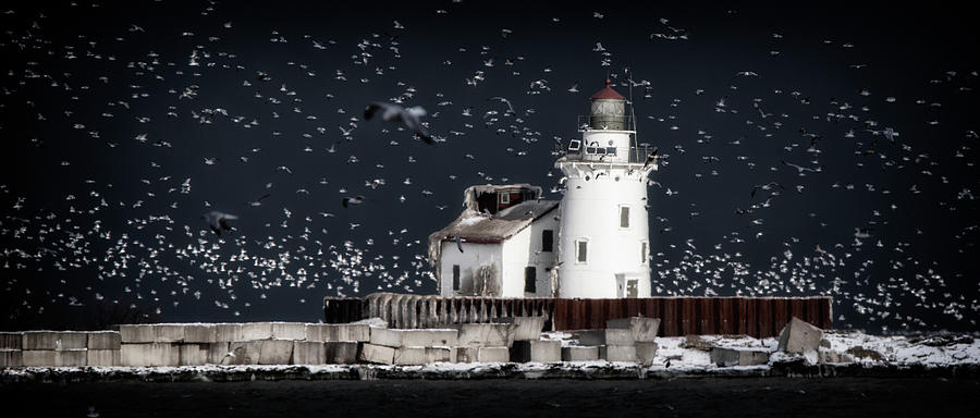 Surrounded by Seagulls  by Rosette Doyle