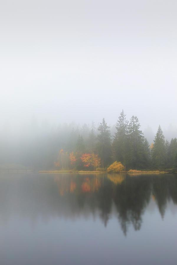 Survivors of the mist by Dominique Dubied