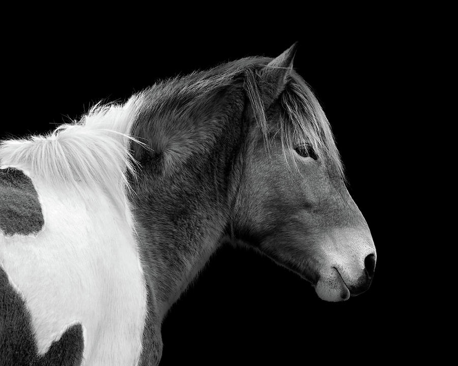 Susi Sole Portrait in Black and White by Assateague Pony Photography