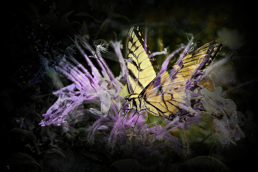 Swallowtail Photograph - Swallowtail by Andrew Zydell