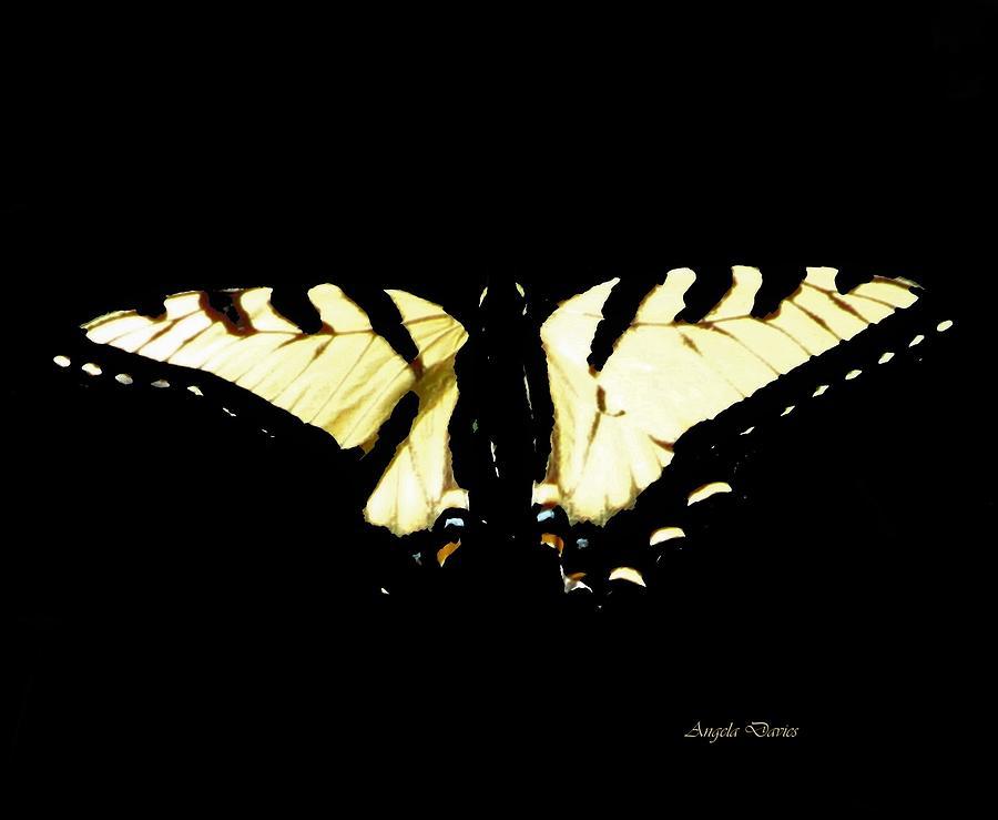 Swallowtail by Angela Davies