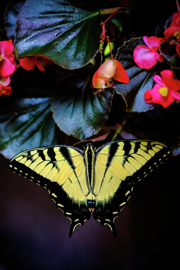 Swallowtail Butterfly Resting by Glenn DiPaola