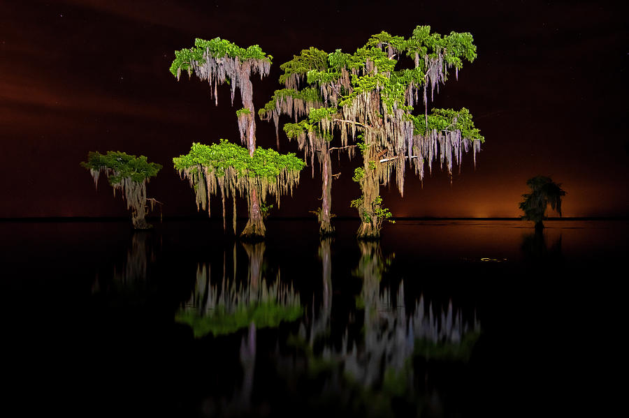 Swamp after dark by Andy Crawford