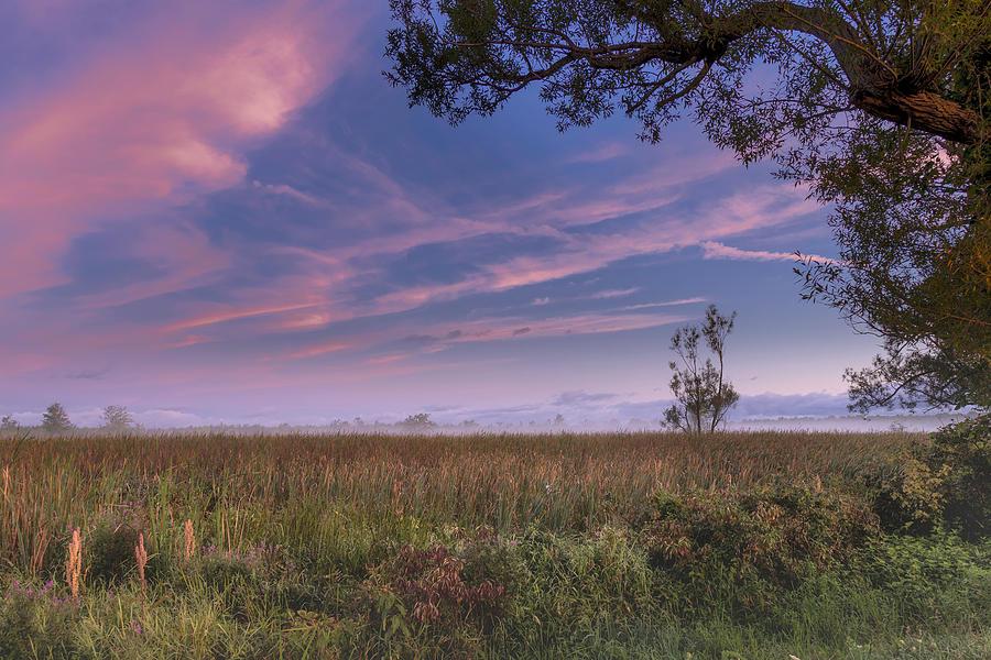 Swamp Sunrise by Rod Best