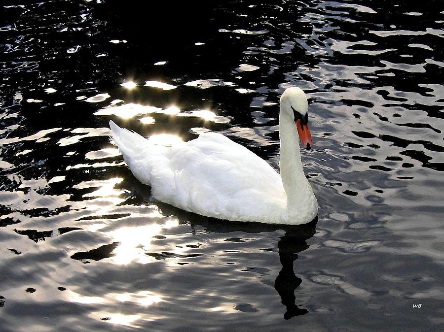 Swan In Electric Waters Photograph