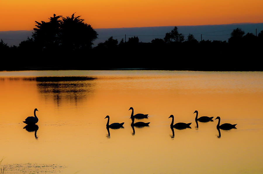 Swan Lake Photograph by Images Created With Care And Enthusiam....
