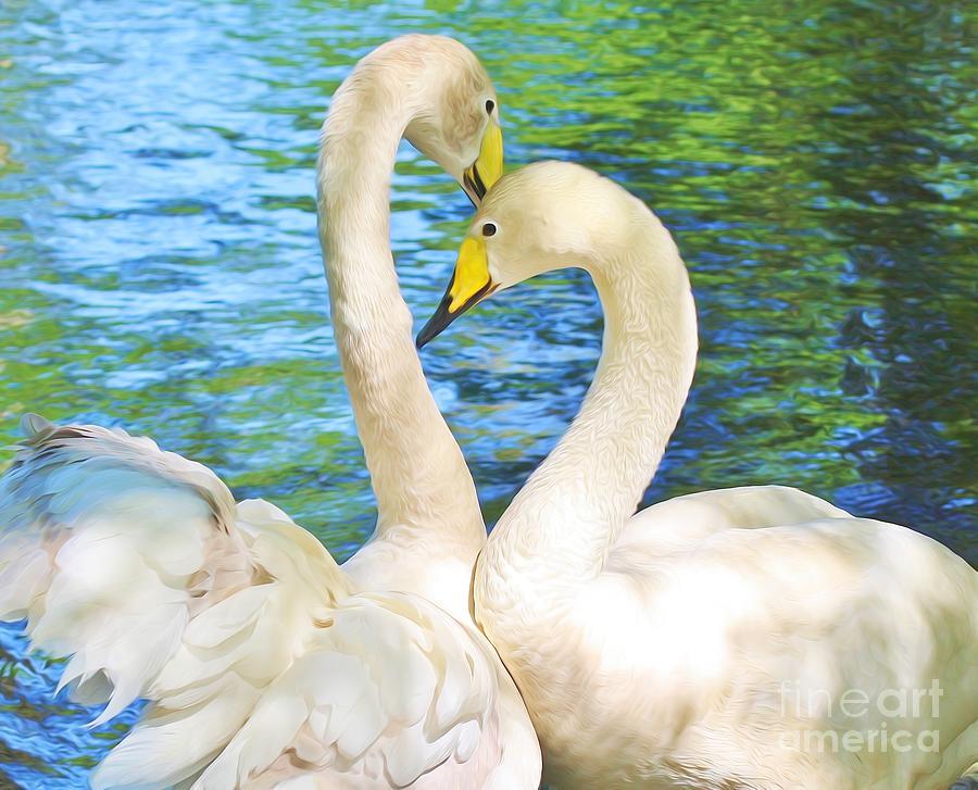 Swan Love by Paulette Thomas
