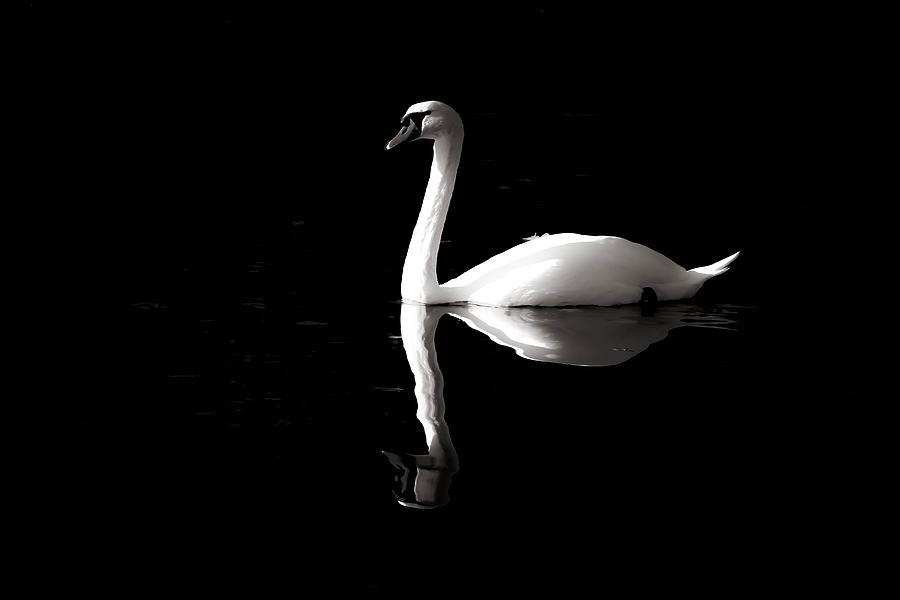 Swan Reflection by Art Shack