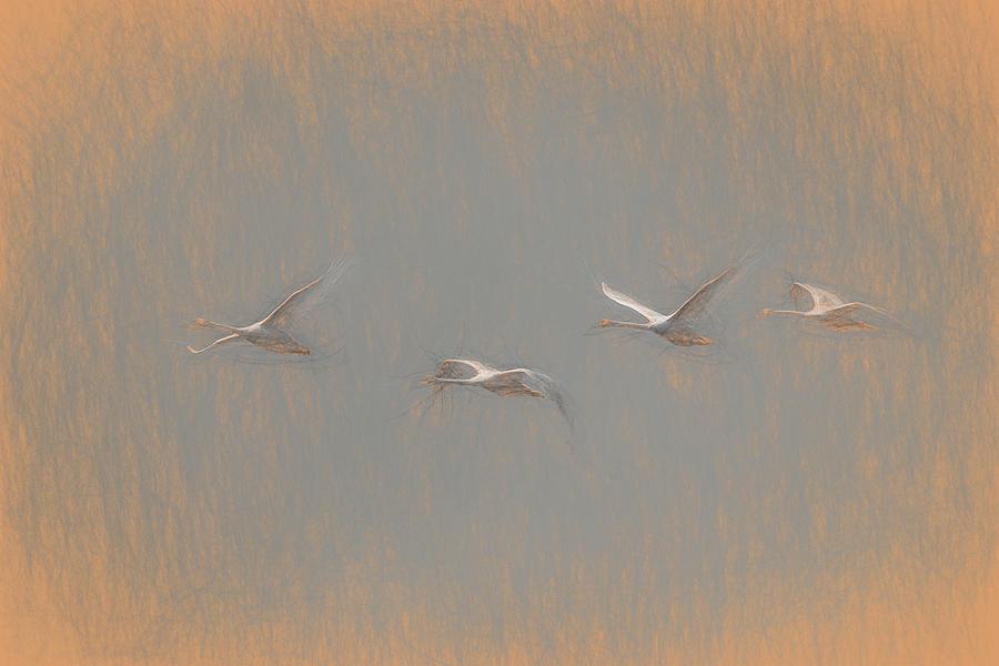 Swans Flying Leonardo da Vinci by David Pyatt