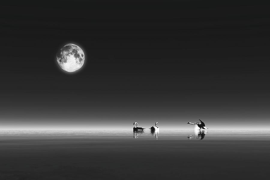 Swans by Jan Keteleer
