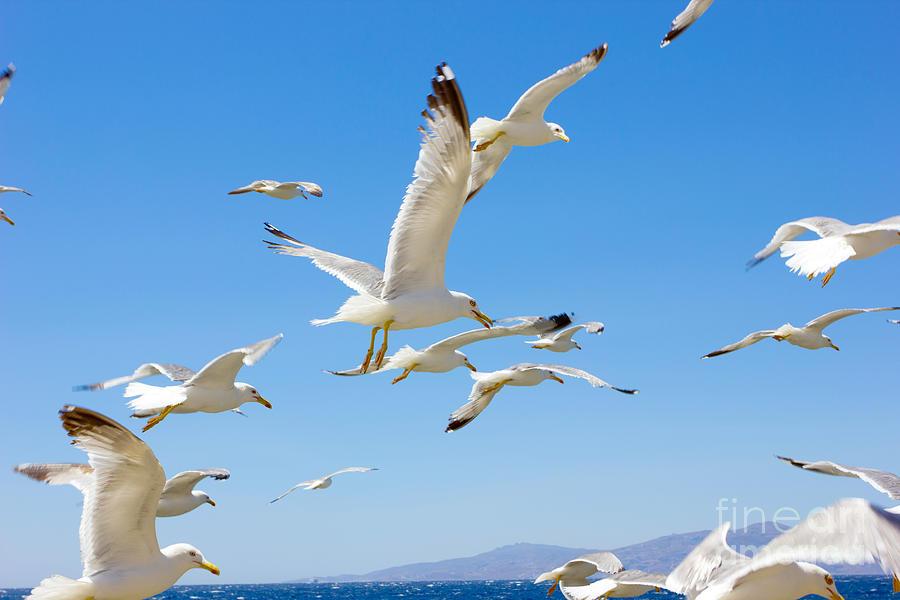Greek Photograph - Swarm Of Sea Gulls Flying Close by Smoxx