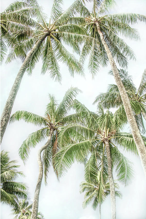 Swaying Palms by Ramona Murdock