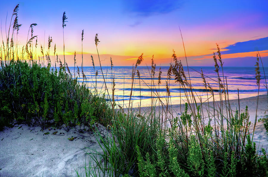 Swaying Sea Oats on the Outer Banks by Dan Carmichael