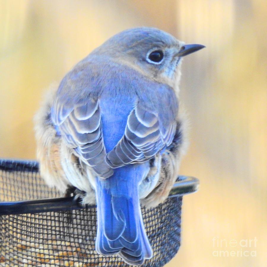 Sweet Bluebird Visits by Eunice Miller