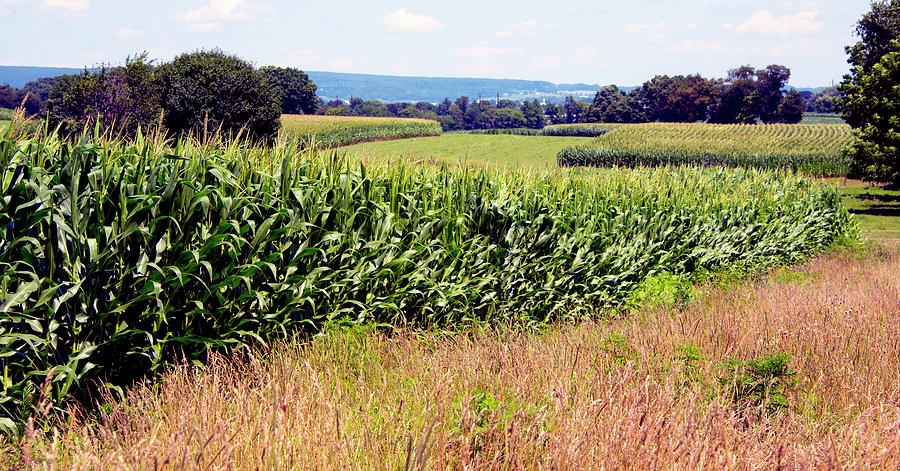 Sweet Corn Heaven in Pennsylvania by Paul W Faust - Impressions of Light