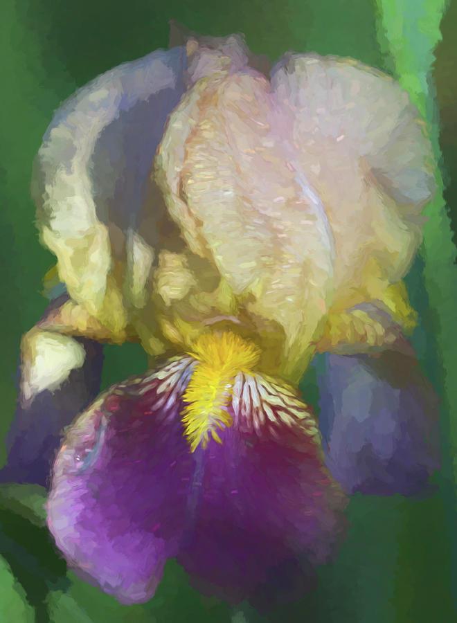 Sweet Iris Monet by Kathy Clark