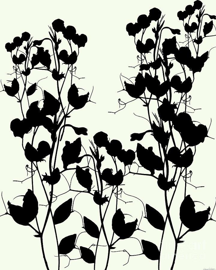 Sweet Pea Silhouette by Deborah Eve Alastra
