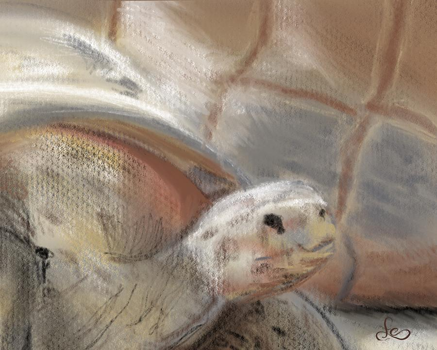 Tortoise Digital Art - Sweet Tortoise by Fe Jones