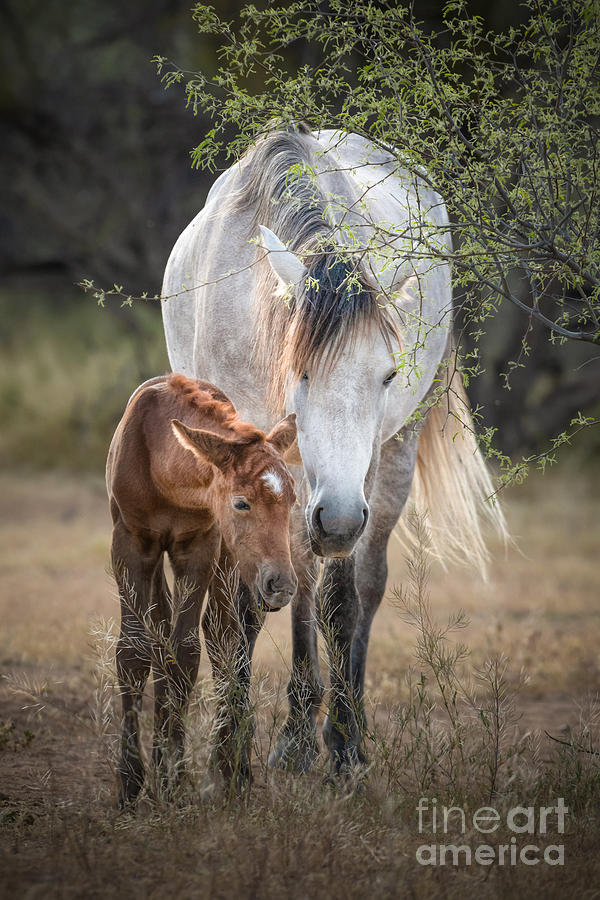Sweet Whispers by Lisa Manifold