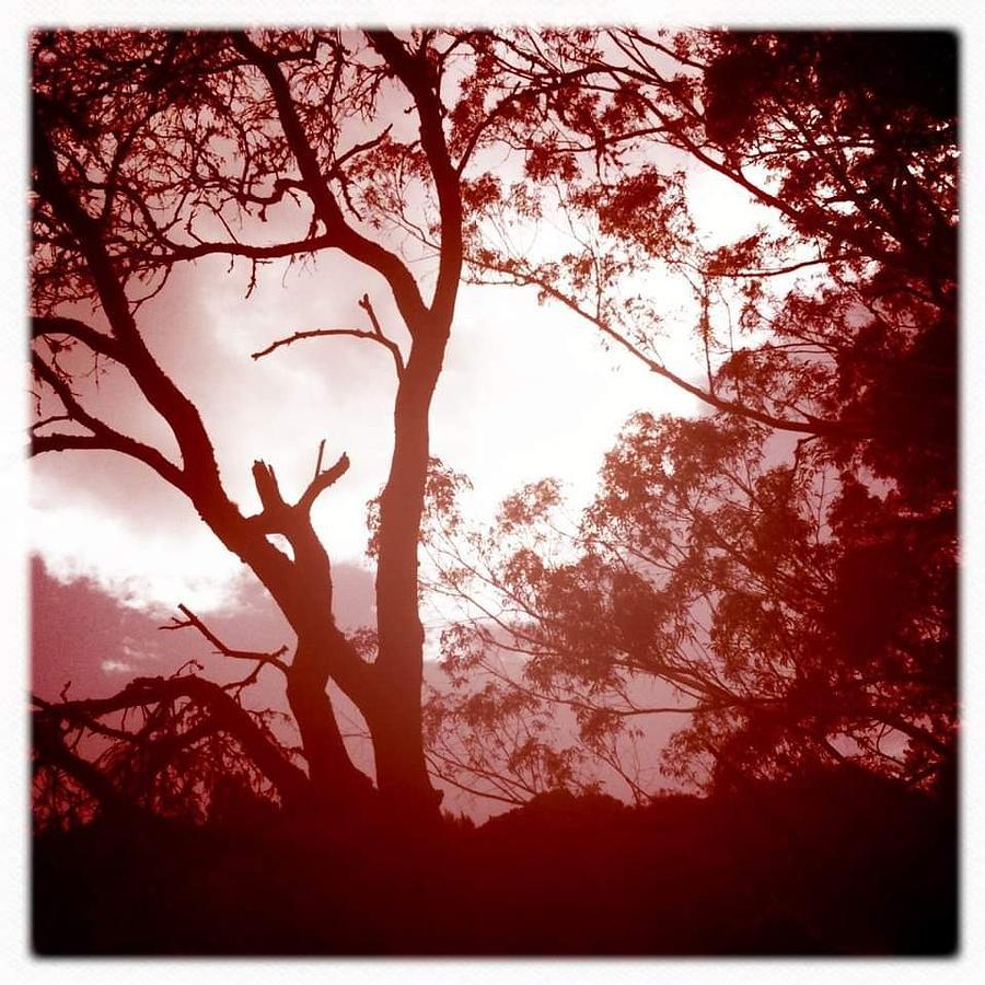 Trees Digital Art - Swept Away by Sharon Green
