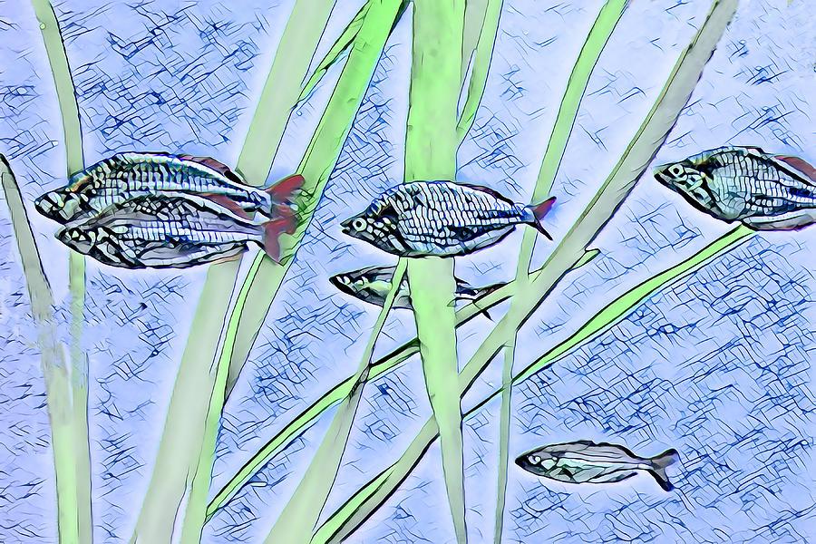 Swimming Fish by Rosalie Scanlon