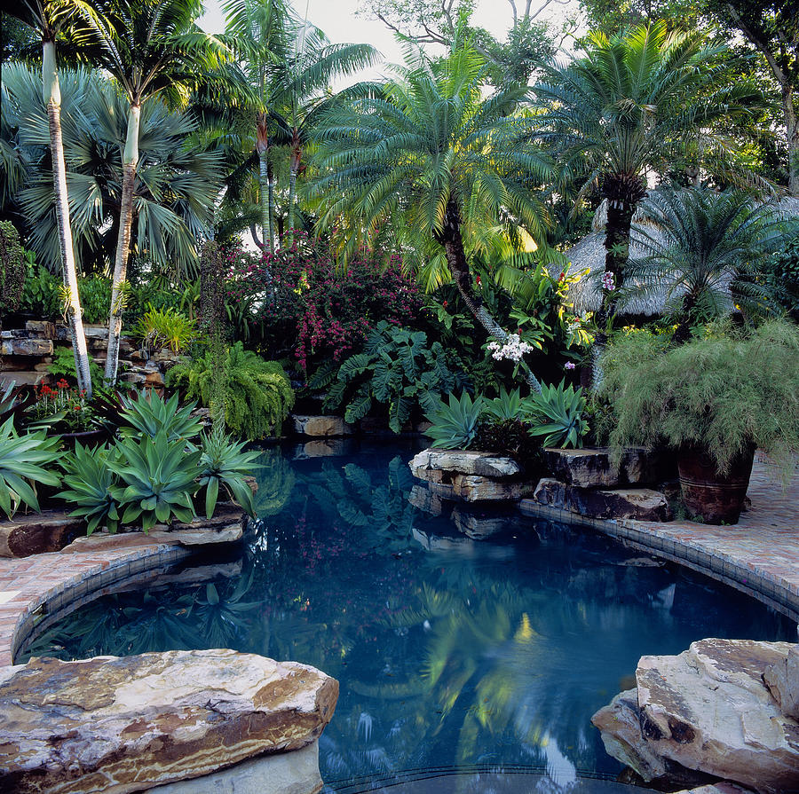 Swimming Pool Surrounded By Tropical by Richard Felber