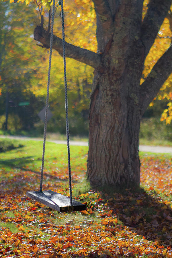 Swinging into Fall by Steven David Roberts