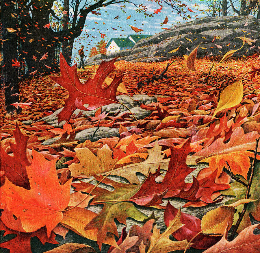 Swirling Fall Leaves Photograph by Graphicaartis
