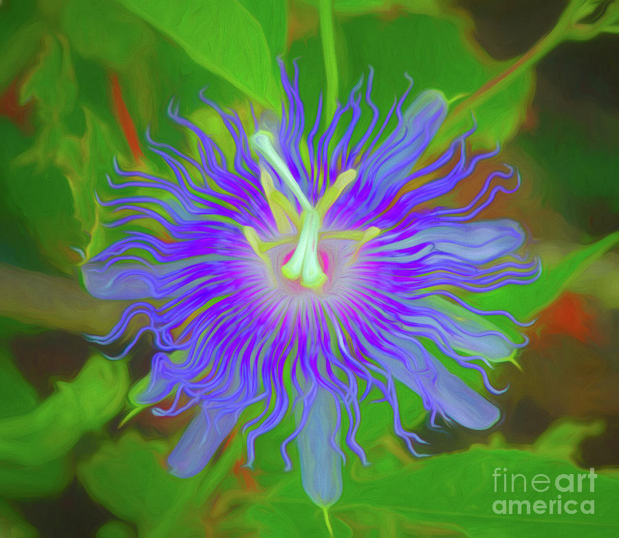 Swirly Passionflower  by Michelle Tinger