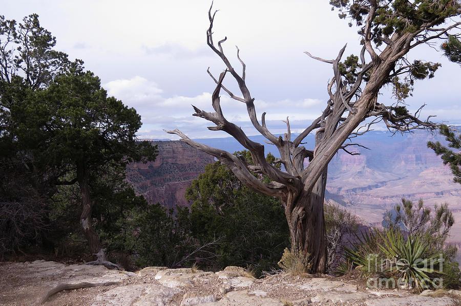 Twisted Photograph - Swirly Tree by Mary Mikawoz