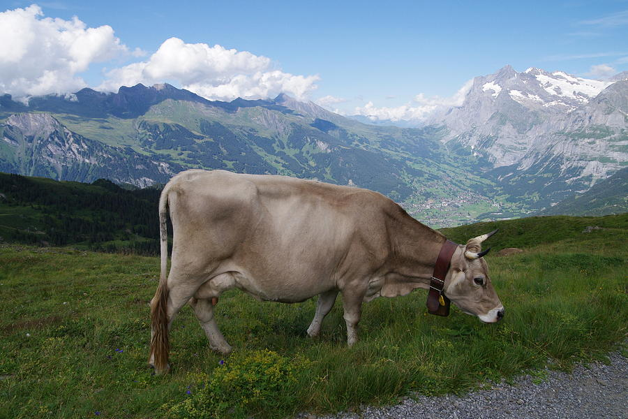 Switzerland Photograph by Michio1975