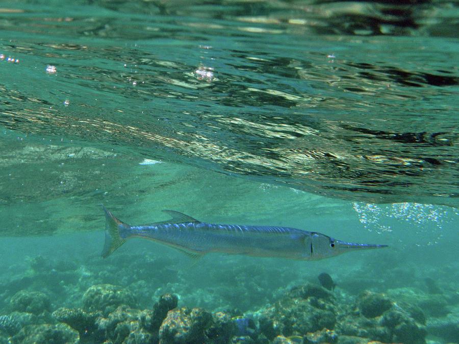 Swordfish Photograph by Federica Grassi