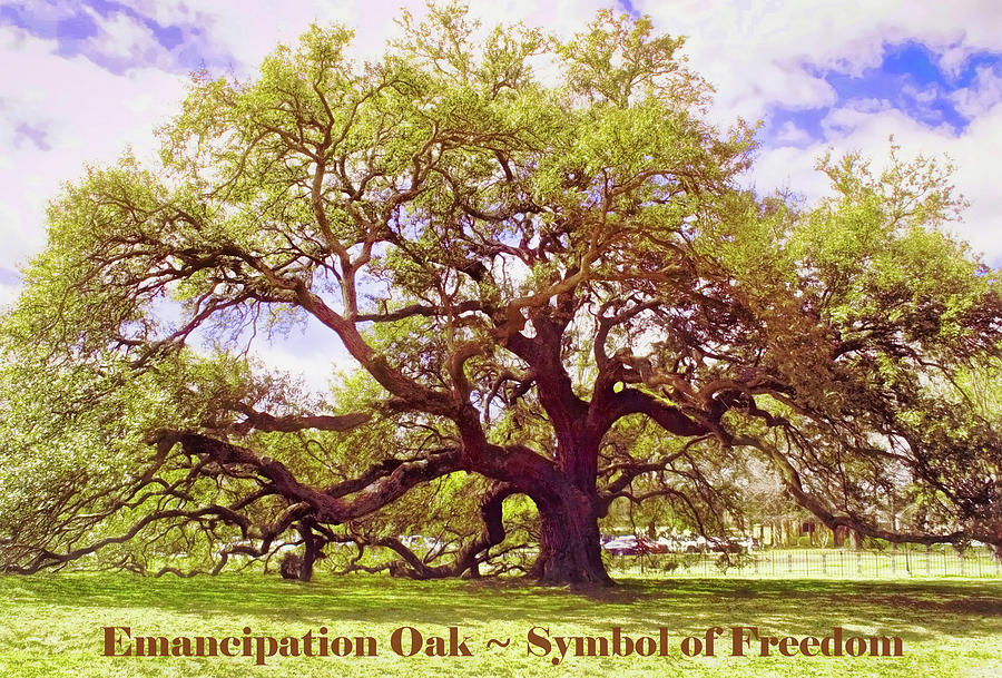 Symbol Of Freedom - Emancipation Oak Photograph