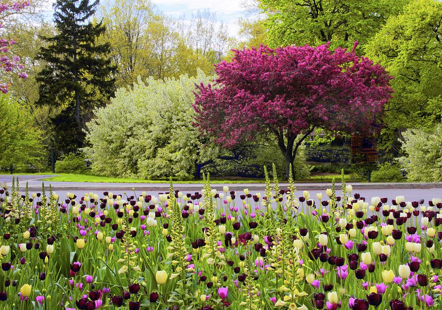 Garden Photograph - Symphony Of Spring by Jessica Jenney