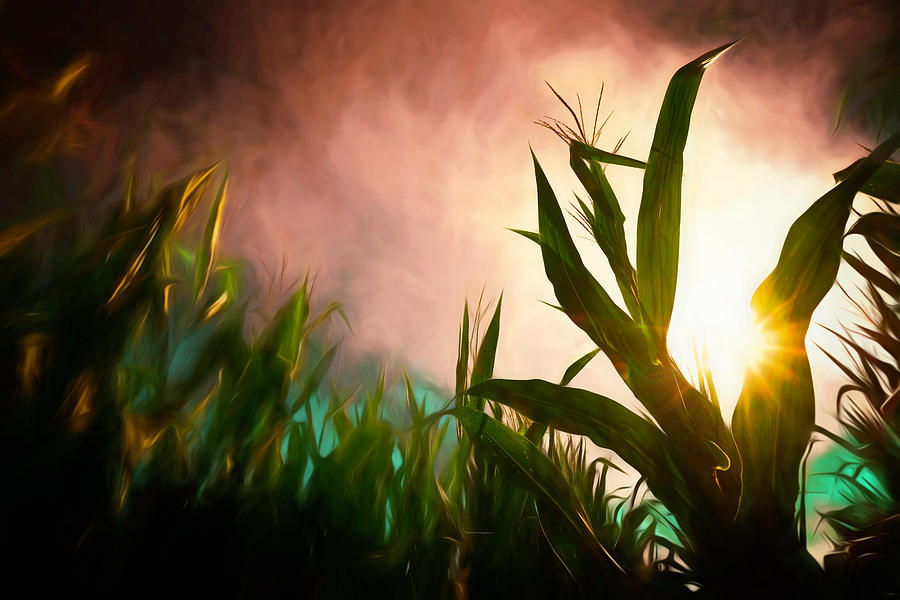 Corn Photograph - Symphony Unseen by Jim Love