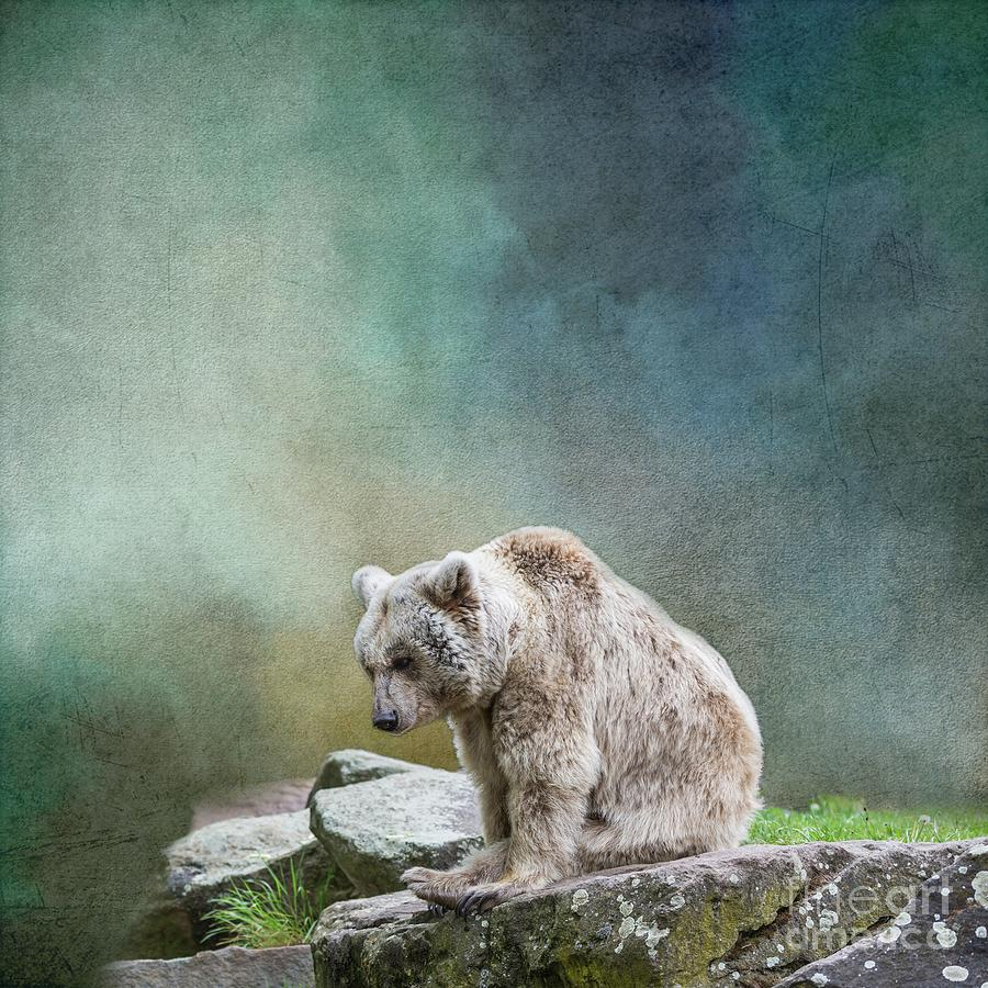 Syrian Brown Bear-3 by Eva Lechner