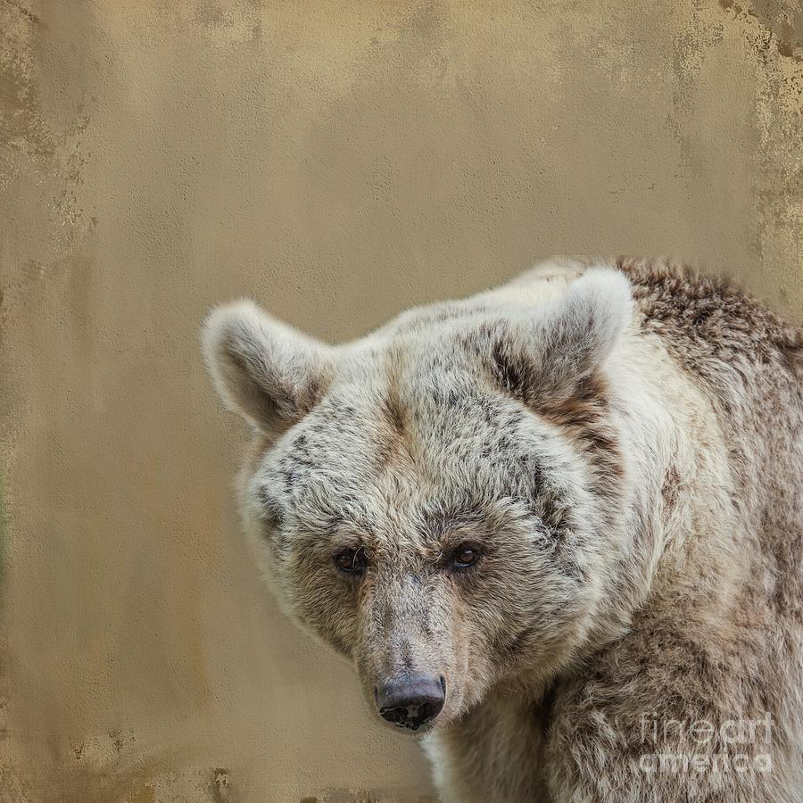 Syrian Brown Bear Portrait by Eva Lechner